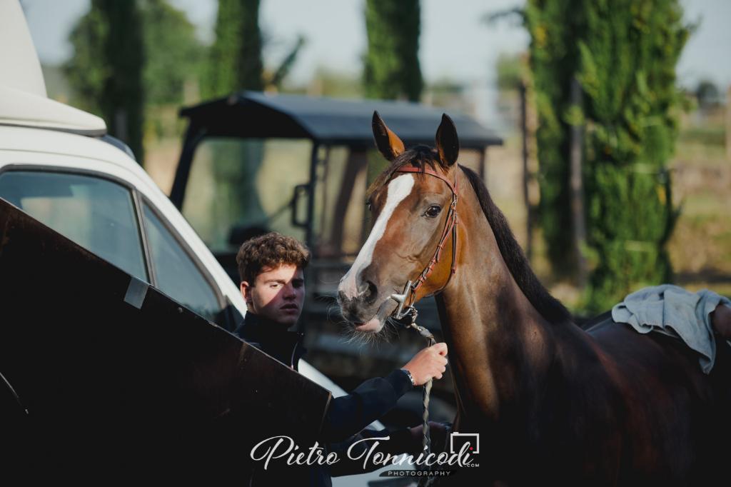 Protocollo Equino 2020: prorogata al 18 giugno la scadenza per iscrivere i cavalli