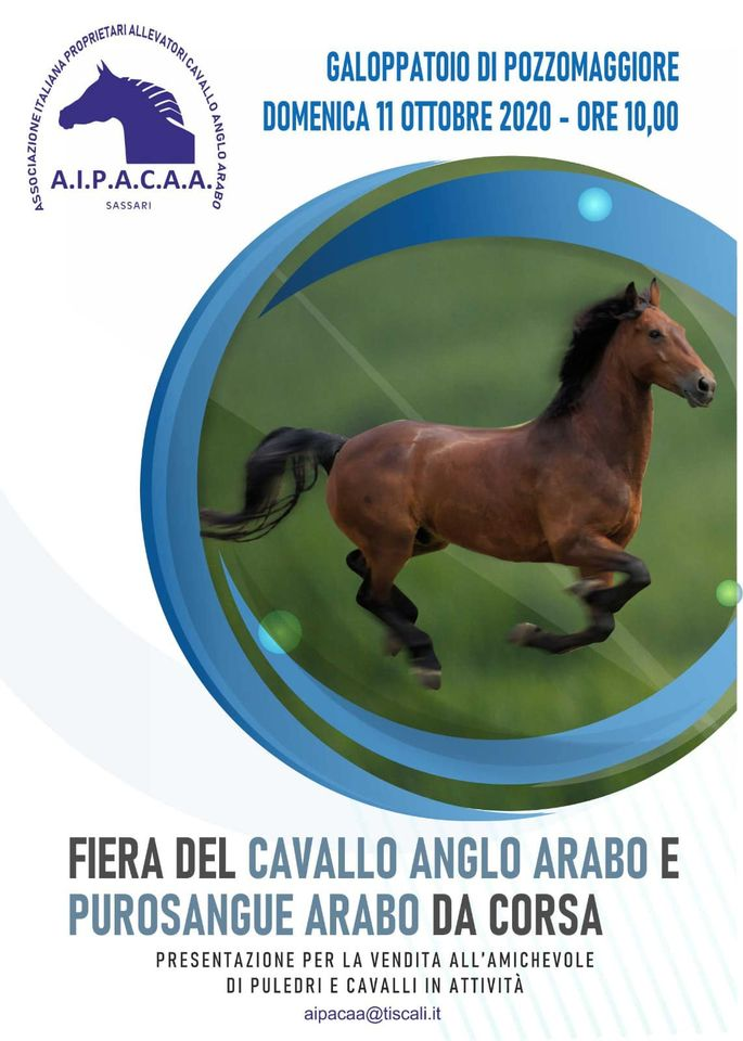 Oggi scadono le iscrizioni per la Fiera del cavallo anglo-arabo