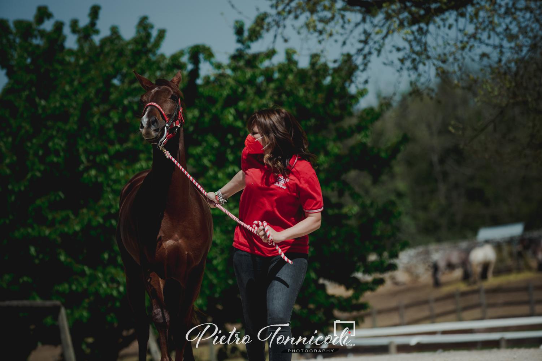 Sono 146 i cavalli ammessi al Protocollo 2021