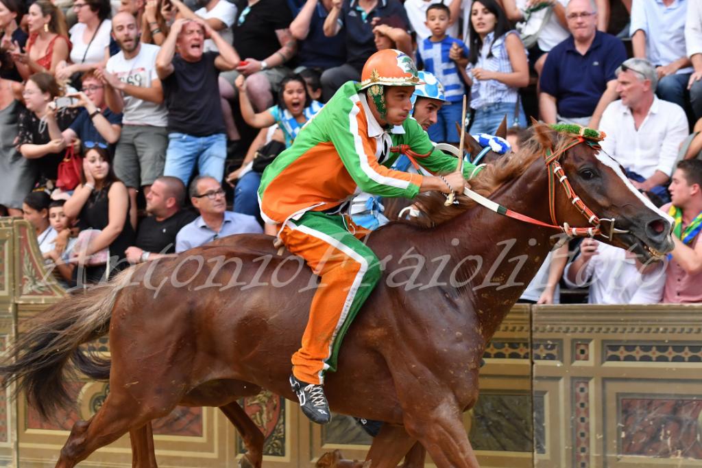 I video dei cavalli vincitori di Palio alle Previsite