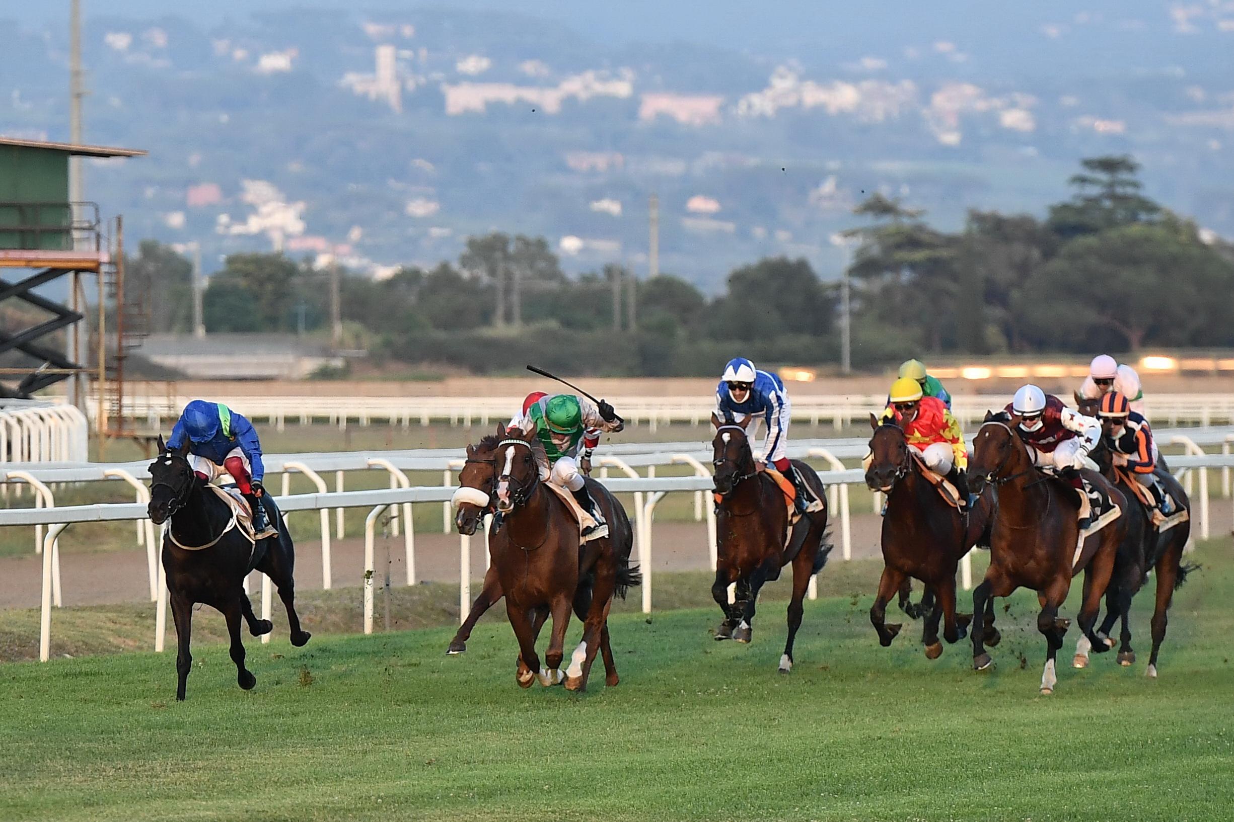 Corse regolari: oggi a Firenze due corse per cavalli anglo-arabi