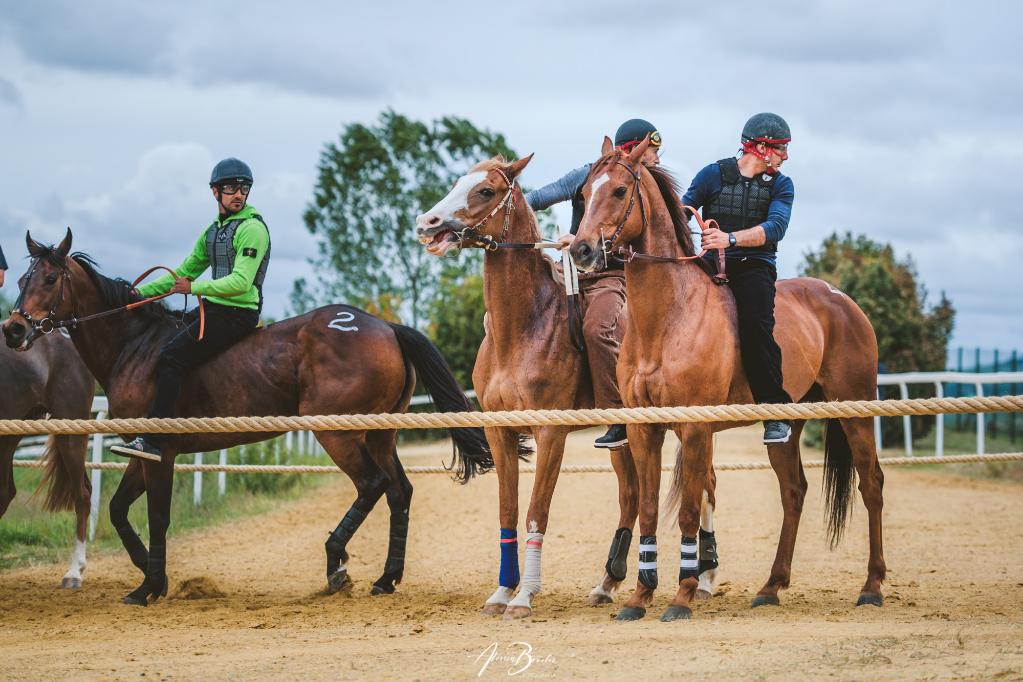 Ecco il nuovo calendario di Addestramento per i cavalli da Palio
