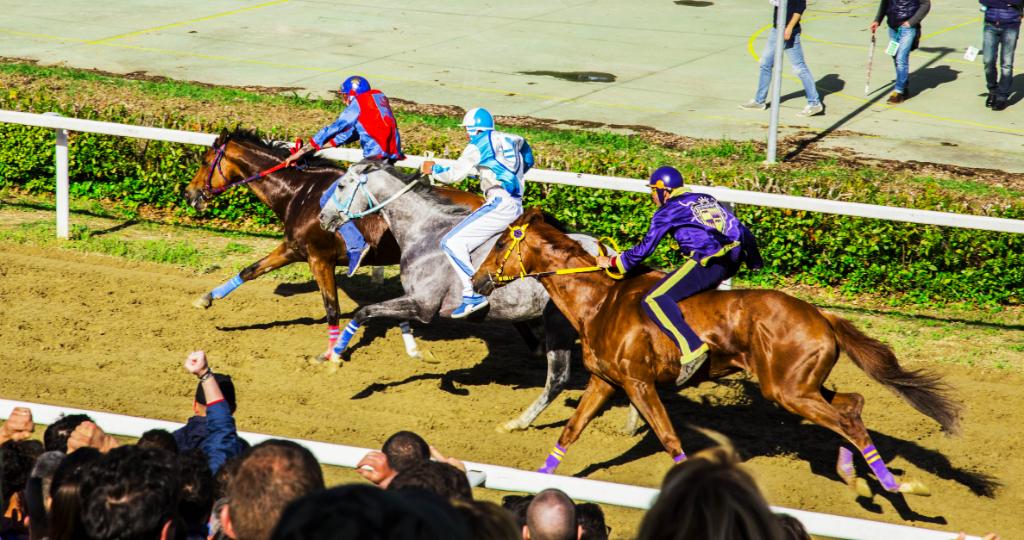 Fucecchio: sono 71 i cavalli iscritti alle previsite